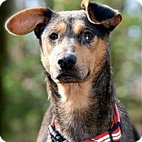 Adopt A Pet :: Jersey Girl - Hastings, NY