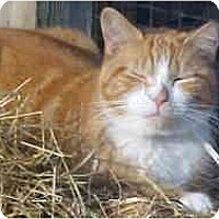 Adopt A Pet :: Sunshine - Lunenburg, MA