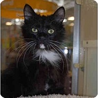 Adopt A Pet :: Rufus - Modesto, CA