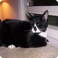 Adopt A Pet :: Jacob - Speonk, NY