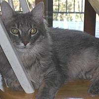 Adopt A Pet :: Smooch - Sac/Auburn, CA