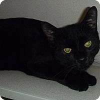 Adopt A Pet :: Mickey - Hamburg, NY