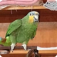 Adopt A Pet :: Julep - Lenexa, KS