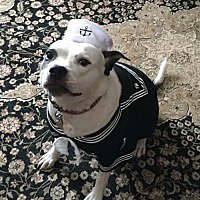 Adopt A Pet :: Maggie Mae - Whitestone, NY