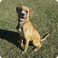 Adopt A Pet :: Tiberius - Moberly, MO