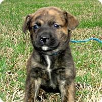 Adopt A Pet :: LEAH/APP REVIEW - PRINCETON, KY