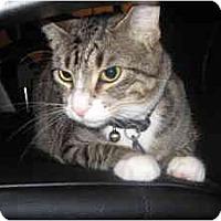Adopt A Pet :: Virgil - Milwaukee, WI