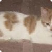 Adopt A Pet :: K-Sissy3-Eros - Colorado Springs, CO