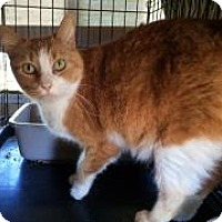 Adopt A Pet :: Big Girl - Mission Viejo, CA