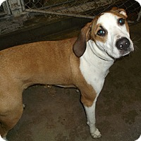 Adopt A Pet :: Cooper (Maxwell) - Geneseo, IL