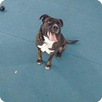 Adopt A Pet :: Griz - Garden City, MI