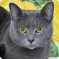 Adopt A Pet :: Newbie - Englewood, FL