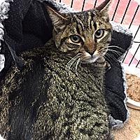 Adopt A Pet :: Macy - Oakland, CA