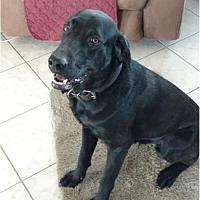 Adopt A Pet :: JJ  (Jay Jay) - Houston, TX
