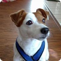 Adopt A Pet :: Jack (Whittier) - Carmichael, CA