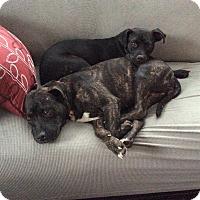 Adopt A Pet :: Gracie - Blue Bell, PA