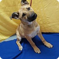 Adopt A Pet :: Jillian - Hawk Point, MO