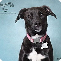 Adopt A Pet :: Tina - Phoenix, AZ