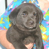 Adopt A Pet :: Moses - Allentown, PA