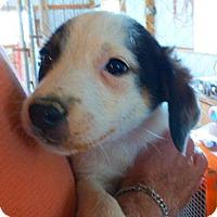 Adopt A Pet :: SPIKE - Katy, TX