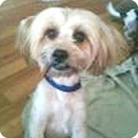 Adopt A Pet :: HERMES - Hollywood, FL