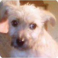 Adopt A Pet :: Muffin - Duluth, GA