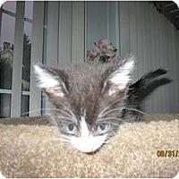 Adopt A Pet :: Loki - Catasauqua, PA