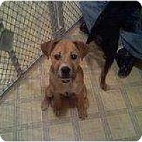 Adopt A Pet :: Paisley - Alliance, NE