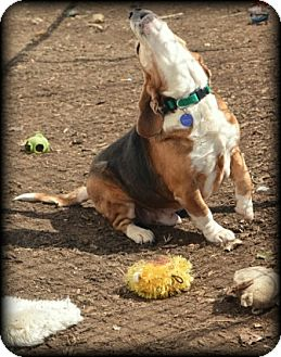 Beagle Mix Dog for adoption in Waldorf, Maryland - Rainier Hughes
