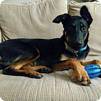 Adopt A Pet :: Bella - Richmond, VA