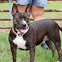 Adopt A Pet :: Scarlet - Myakka City, FL
