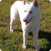 Adopt A Pet :: Icy - Campbell, CA