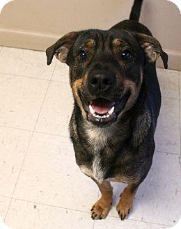 Shepherd (Unknown Type) Mix Dog for adoption in Trenton, New Jersey - Joseph