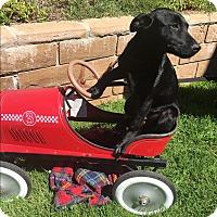 Adopt A Pet :: Trevor - El Cajon, CA