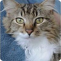 Adopt A Pet :: Rufus - Columbus, OH
