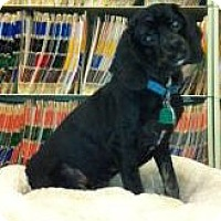 Adopt A Pet :: Charlie Wonder - Sugarland, TX