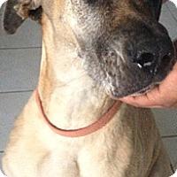 Adopt A Pet :: Yenda - McAllen, TX