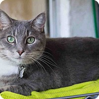 Adopt A Pet :: Ella - New Port Richey, FL