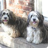 Adopt A Pet :: Ethel and Jimmie Jake - Norwalk, CT