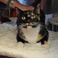 Adopt A Pet :: Petunia - Pompano Beach, FL