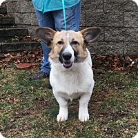 Adopt A Pet :: Julia - Harmony, Glocester, RI