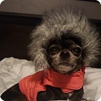 Adopt A Pet :: Kira - Mesa, AZ