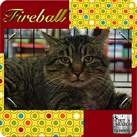 Adopt A Pet :: Fireball - Washington, PA