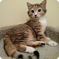 Adopt A Pet :: Skylar - Richmond, VA