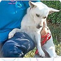Adopt A Pet :: Ranger - Sugar Land, TX