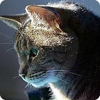 Adopt A Pet :: Lola - Alexandria, VA