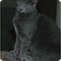 Adopt A Pet :: Twinkle Toes - Chula Vista, CA