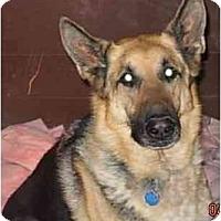 Adopt A Pet :: Cleatus - Hamilton, MT