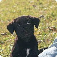 Adopt A Pet :: Domaine - Destrehan, LA