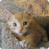 Adopt A Pet :: Virgil - Davis, CA